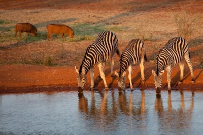 image 1 for Kruger National Park in depth 7 Night Package tour