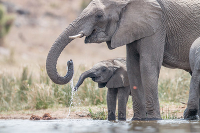 Kruger National Park Safari and Cape Town Package Tour 62270