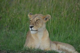Wildlife Safari 7 Nights and 8 Days Migratory Package in Nairobi