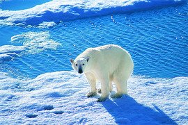 Celebrity Alaskan Cruises in Alaska