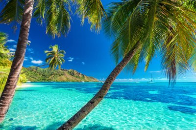 Palm trees on a sandy beach in Tahiti