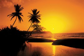 Palm trees at sunset in the Caribbean