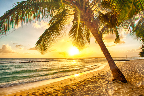 Palm tree and sunshine on a tropical Caribbean beach