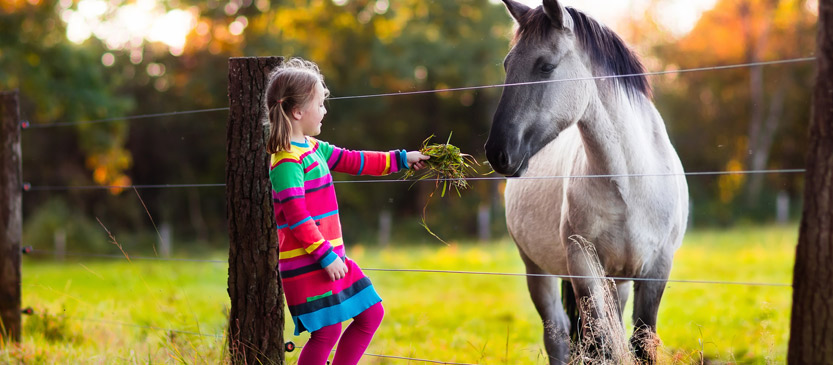 Young girl feeding a horse