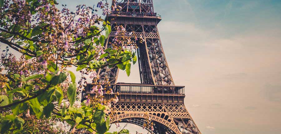 Blossoms in front of the Eiffel Tower, Paris