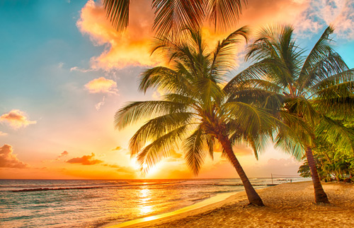 Palm trees on Barbados beach