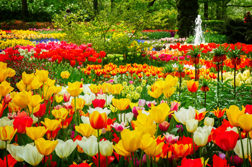 Tulips at Keukenhof Gardens, the Netherlands