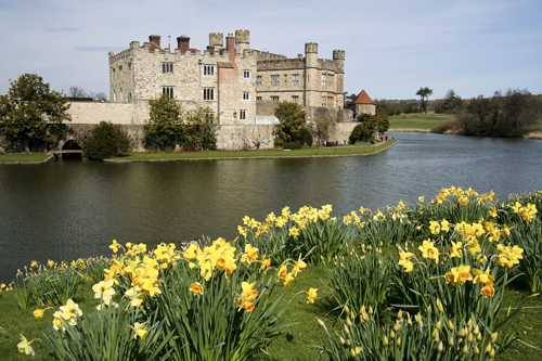 Daffodils at Leeds Castle, Kent