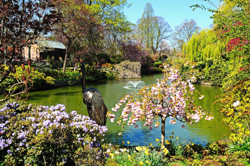 Pond and gardens in Quarry Park, Shrewsbury