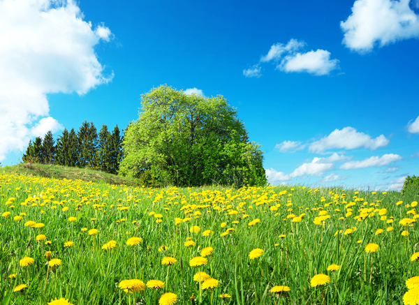 Beautiful sunny spring meadow
