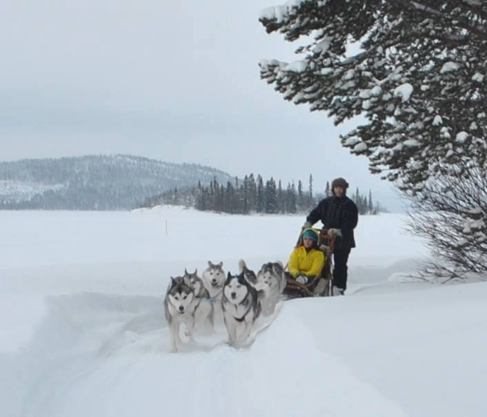 Disabled husky sledding in Lapland