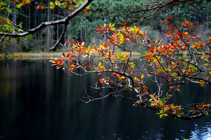Lake in Dalbeattie woods, Dumfries and Galloway