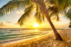 Sunny beach and palm tree in the Caribbean