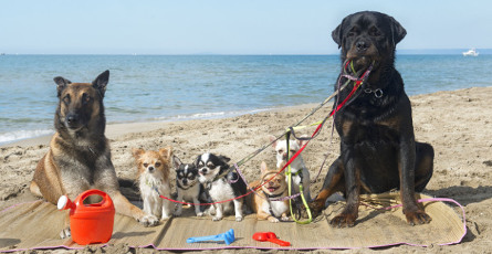 Pet friendly accessible holidays accommodation suitable for Small and friendly holidays
