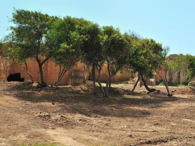 Image 2 of Paphos