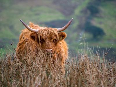 Image 6 of Scotland