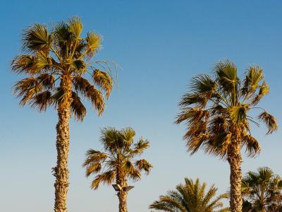 Image 3 of Cyprus